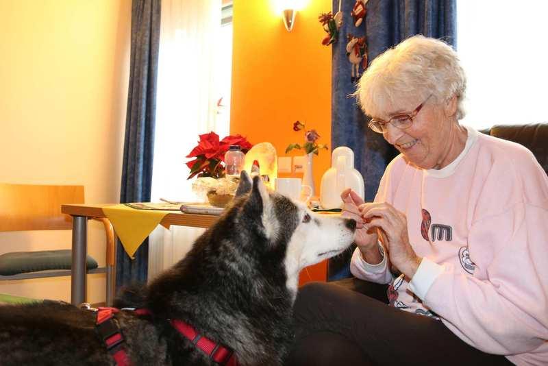 Eine ältere Frau sitzt in einem Sessel und hat einen Husky vor sich. Der Hund sieht sie aufmerksam an und hat die Ohren gespitzt.